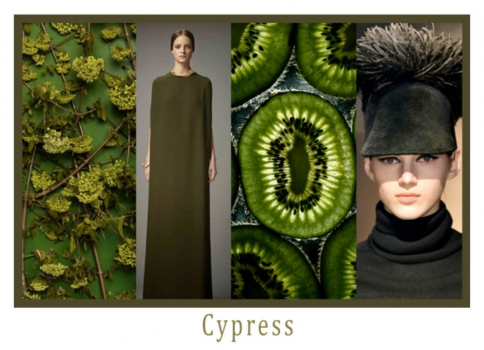 Cypress_Collage