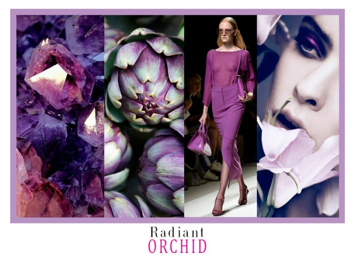 ORQUIDEARADIANTE_COLLAGE