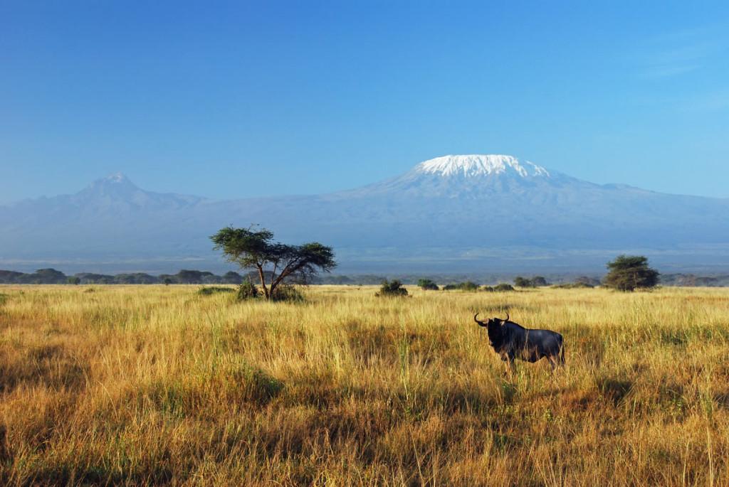 5 Kilimanjaro1baja