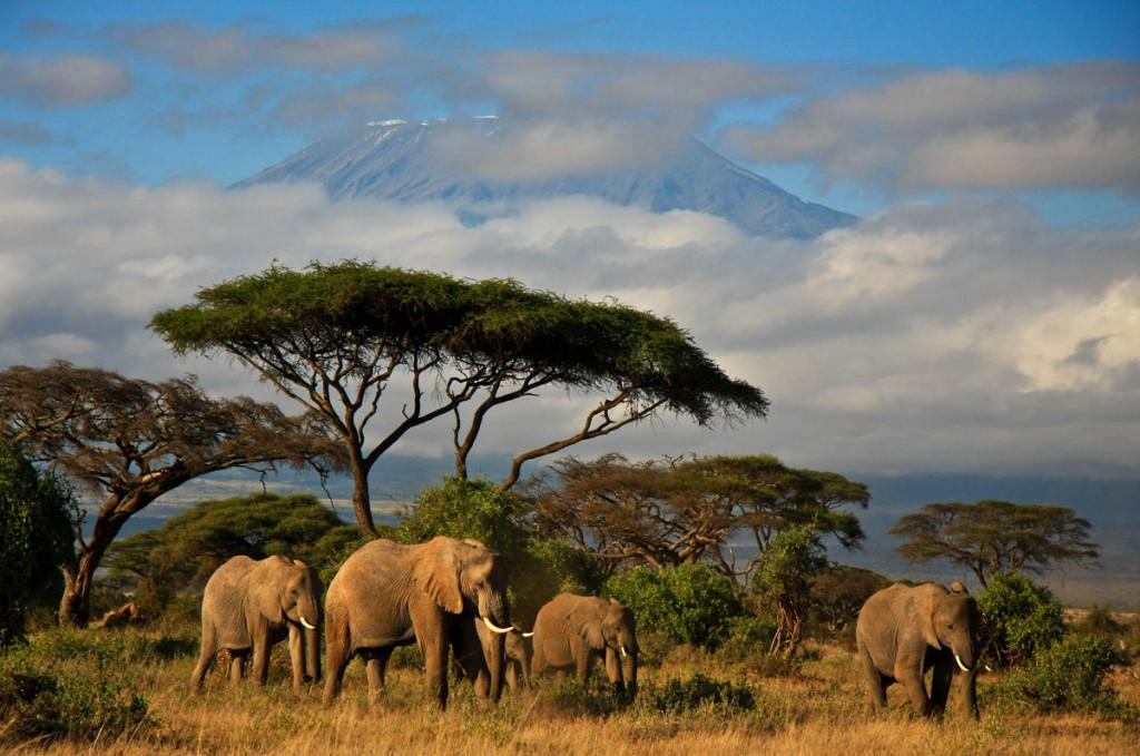 Kilimanjaro2baja