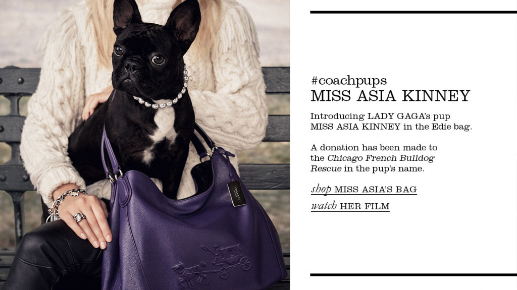 miss_asia_kinney_feature_Coach_
