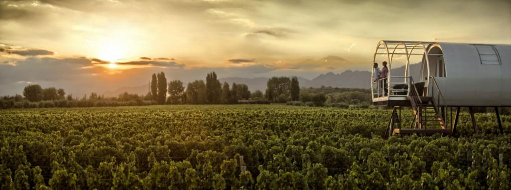 viñedos-entre-cielos-glamping-vino