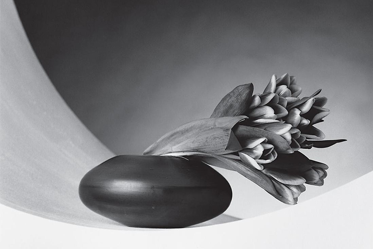 arte robert mapplethorpe