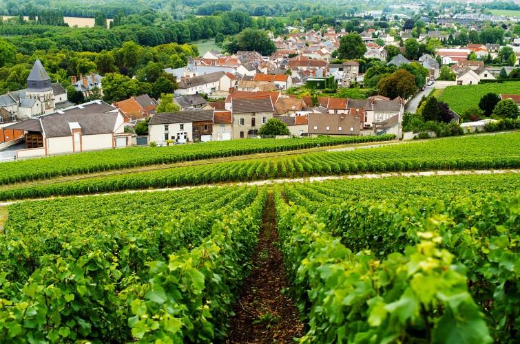 Aÿ-Champagne, región champenoise, la champagne, viajes, gastronomia, horse magazine