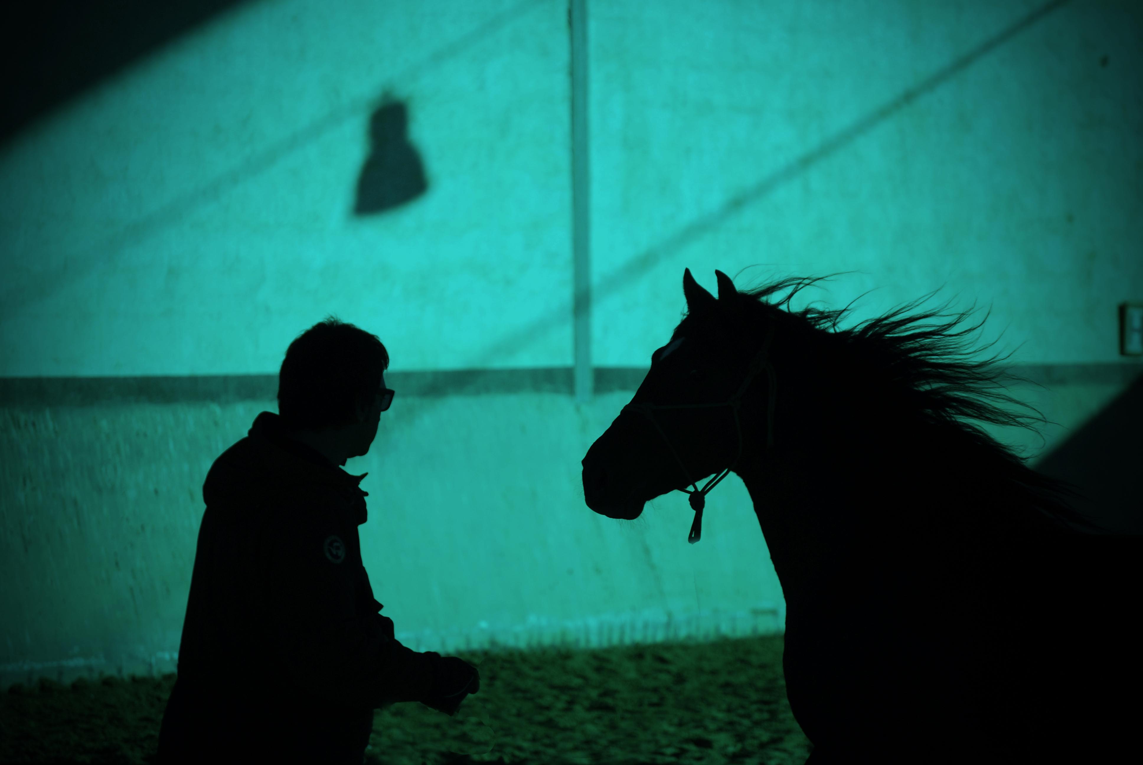 coaching, caballos, coaching con caballos