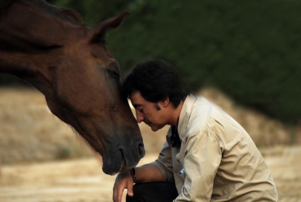 coaching, horses, coaching with horses