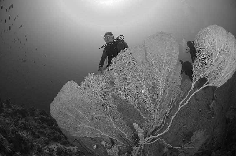 Buceador observando un coral