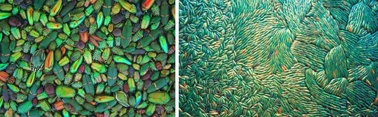 Las carcasas llegan a formar un tapiz de color y de luz