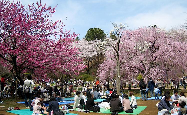 El hanami es una fiesta espontánea que hace que gran parte de los japoneses salgan al campo o a los parques