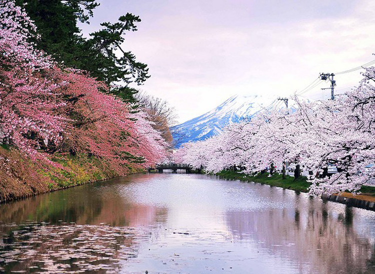 The cherry blossom appears but there is still snow in the mountains